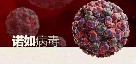Norovirus prevention tips