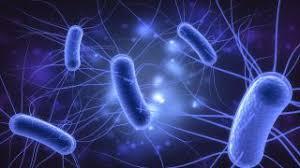 hand hygiene, cleaning, ecoli, bacteria, food hygiene